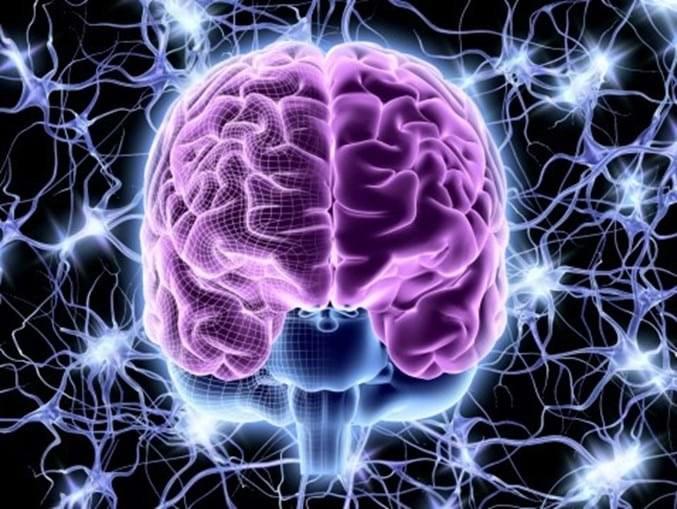 Pesquisadores da UFPB desvendam assimetria entre os dois lados do cérebro ASSISTA AO VIVO