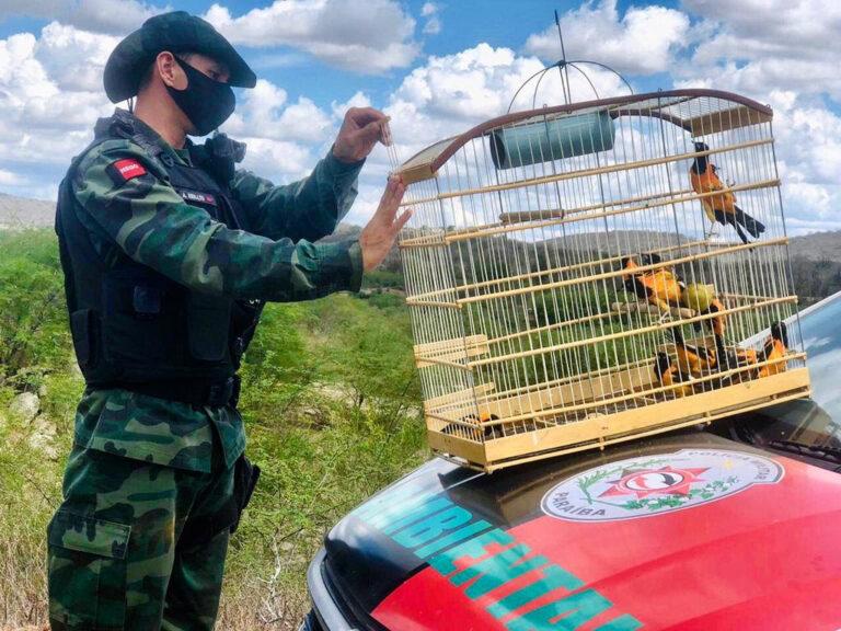 Polícia Militar terá pontos de entrega voluntária de animais silvestres esta semana na Paraíba